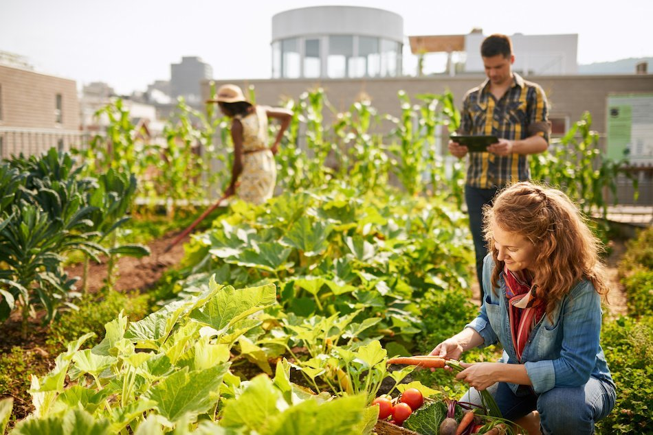 Urban Agriculture Serves New Needs by Offering Free Food